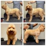 before and after grooming photos