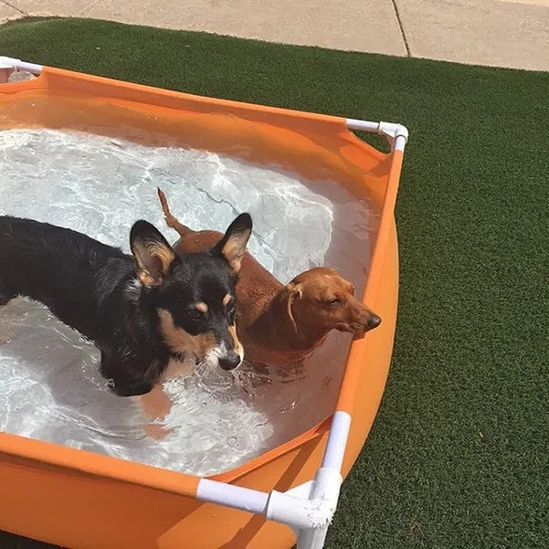 dogs in a pool