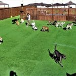 dogs and staff in the play yard