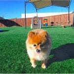 small dog on the play ground