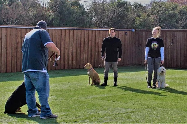 trainer working with owners and dogs